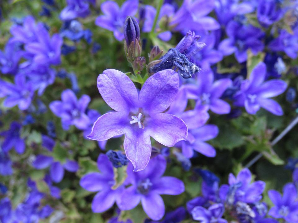 Free photo green nature flowers blue plant spring purple max pixel flowers plant blue purple green nature spring mightylinksfo Choice Image