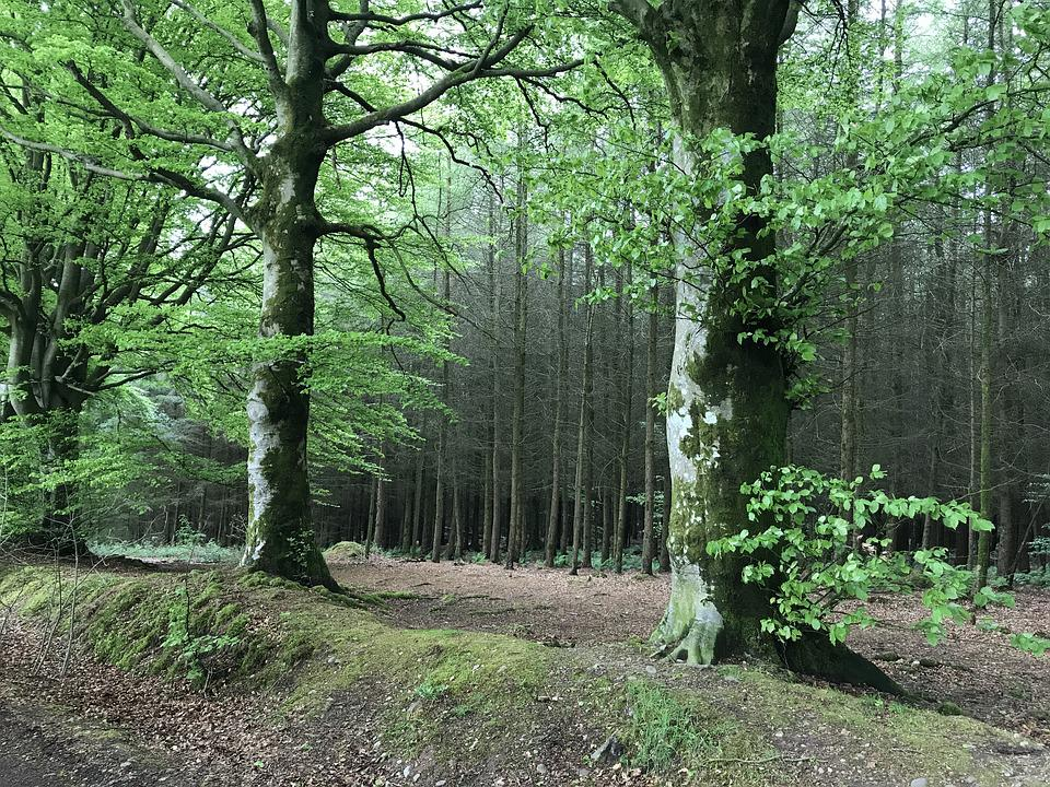Forest, Trees, Woods, Nature, Branches, Green, Scenic