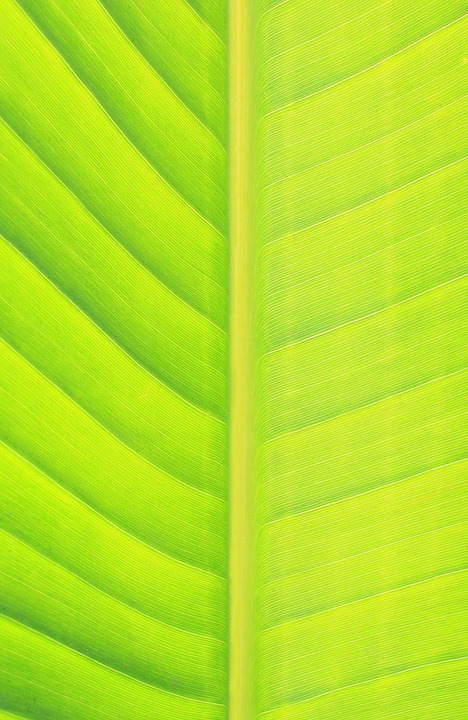 Leaf, Green, Nature, Green Leaf, Banana Leaf, Spring