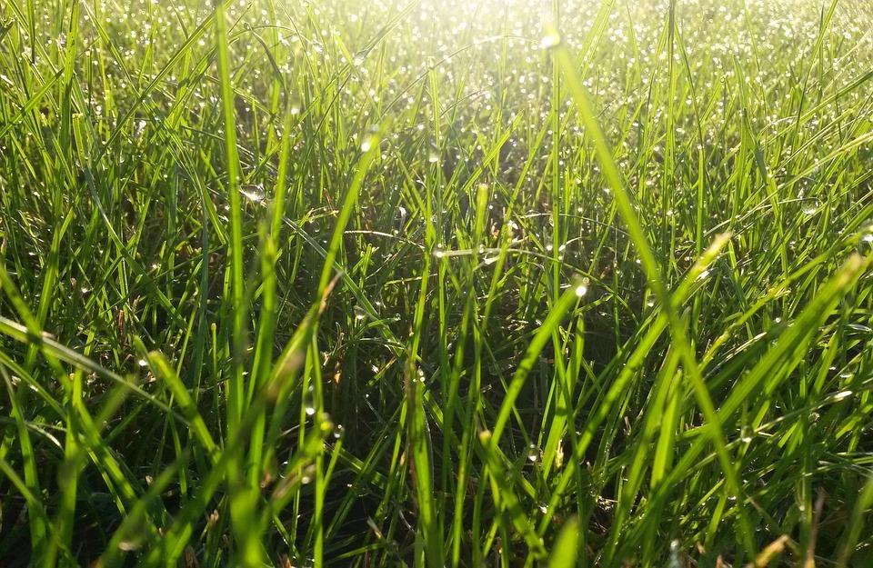 Grass, Garden, Nature, Meadow, Green, Blade Of Grass