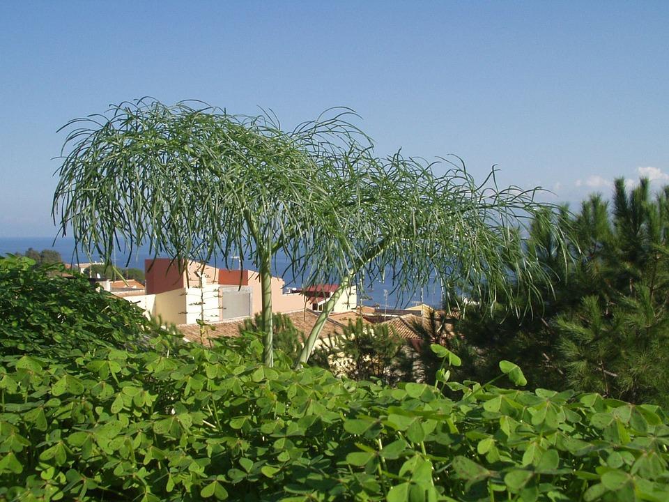 Plant, Nature, Green, Flora, Close, Sicily, Melazzo