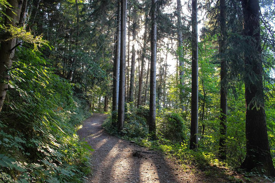 Forest, Forest Path, Sunbeam, Green, Nature, Mood