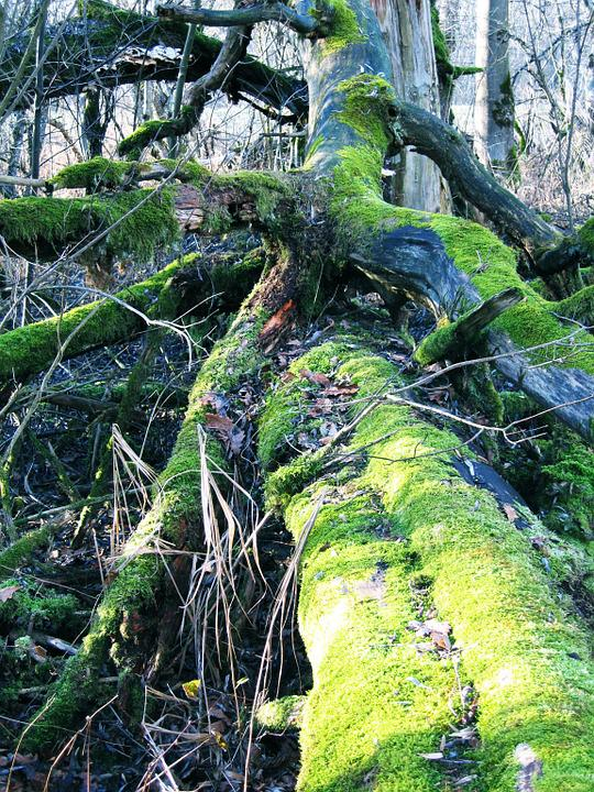 Nature, Moss, Tree, Green, Forest, Log, Landscape