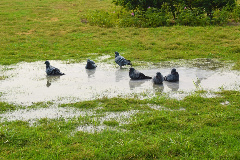 Pigeons, Nature Photography, Photography, Garden, Green