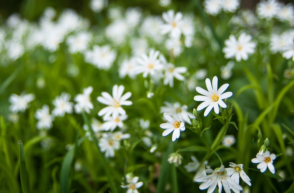 Spring, Green, Weis, Nature, Plant, Blossom, Bloom