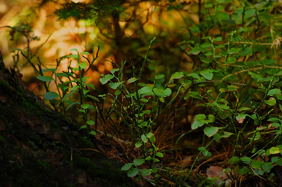 Forest, Bush, Nature, Green, Planting Forest Floor With