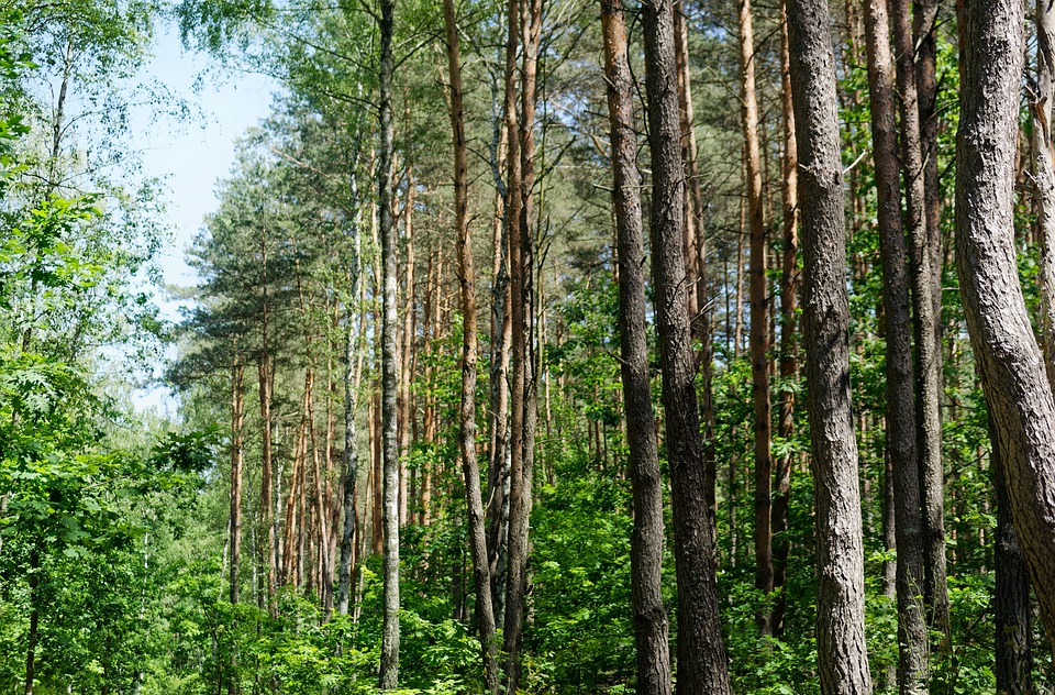 Trees, Top, Forest, Nature, Landscape, Leaves, Green