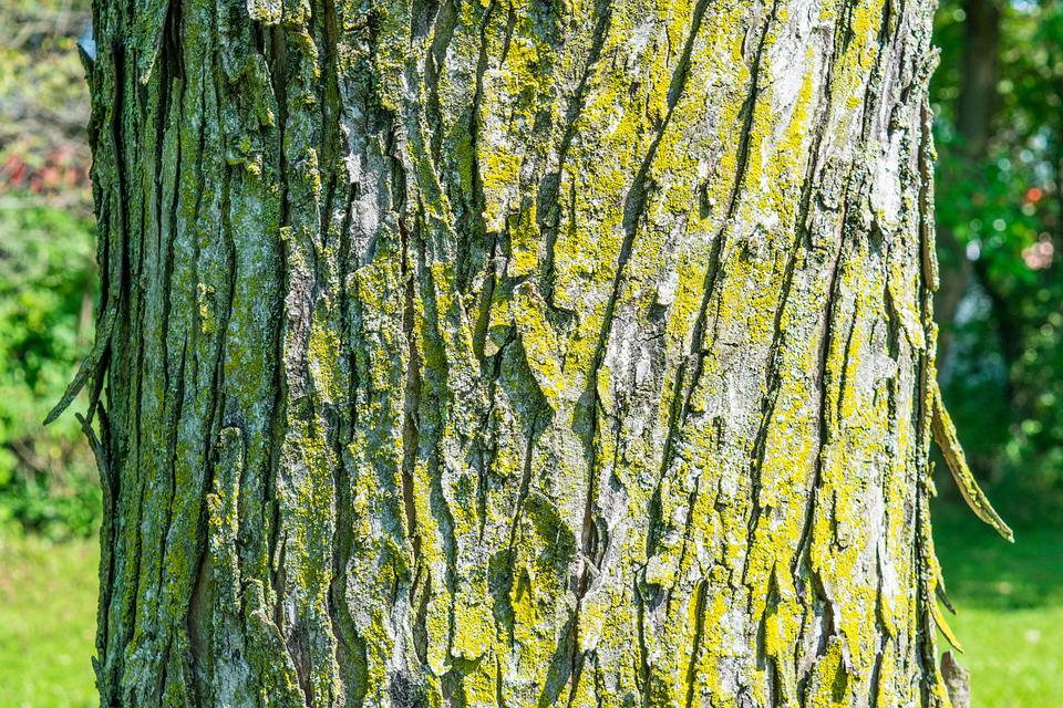 Tree, Bark, Texture, Green, Moss, Nature, Wood