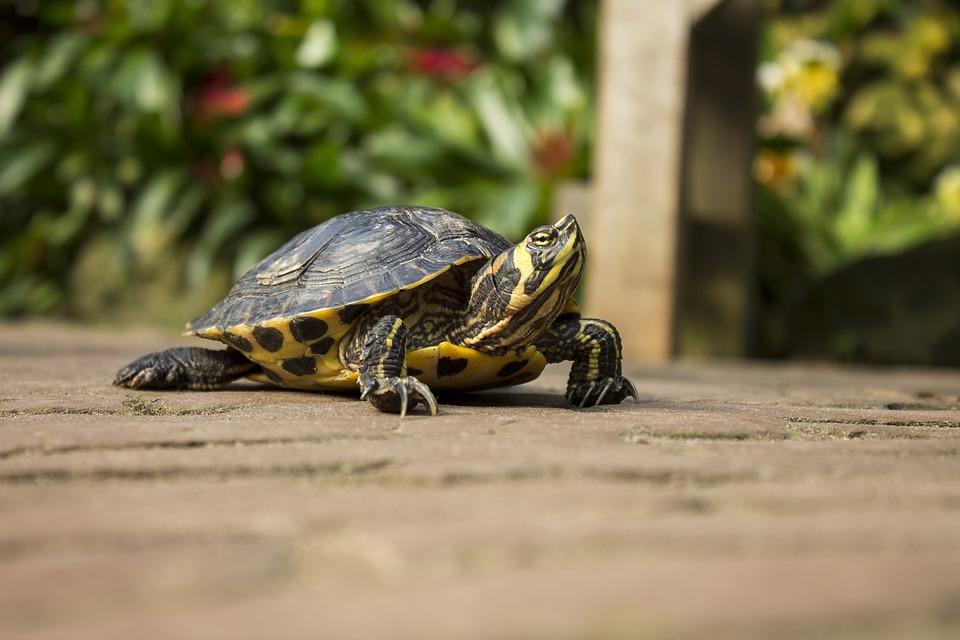 Turtle, Animal, Animals, Green, Yellow, Nature, Zoo