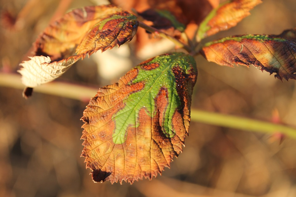 Nature, Leaf, Withered, Dry, Green, Leaves, Plant
