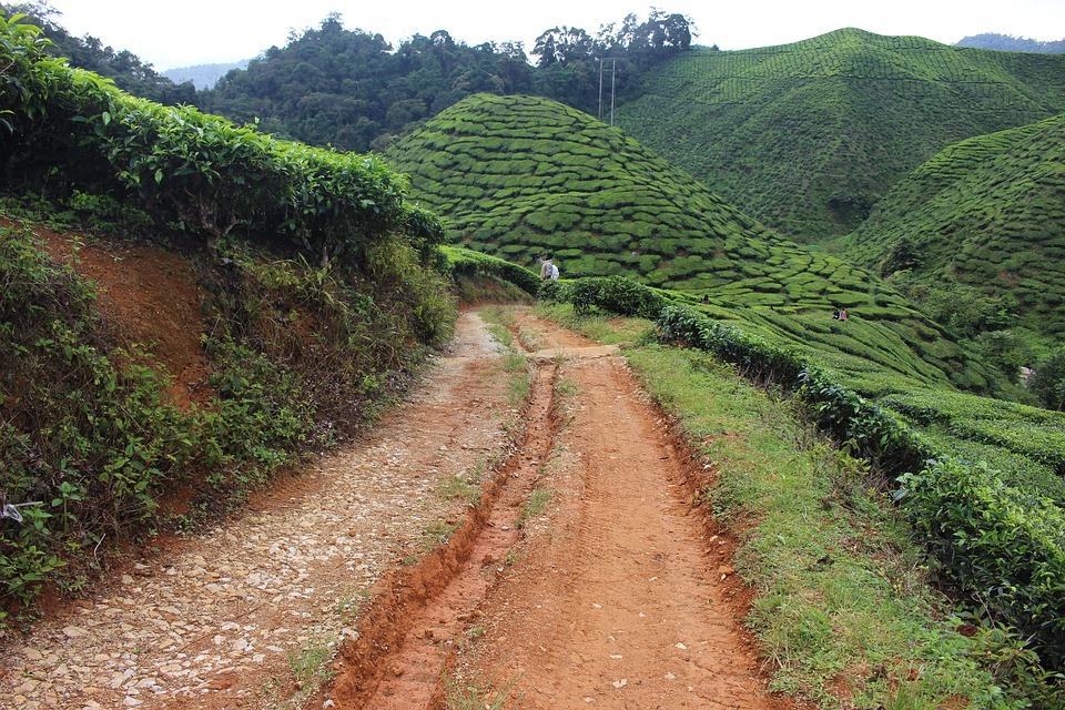 Nature, Roads, Soil, Green, Landscape, Rural, Outdoor
