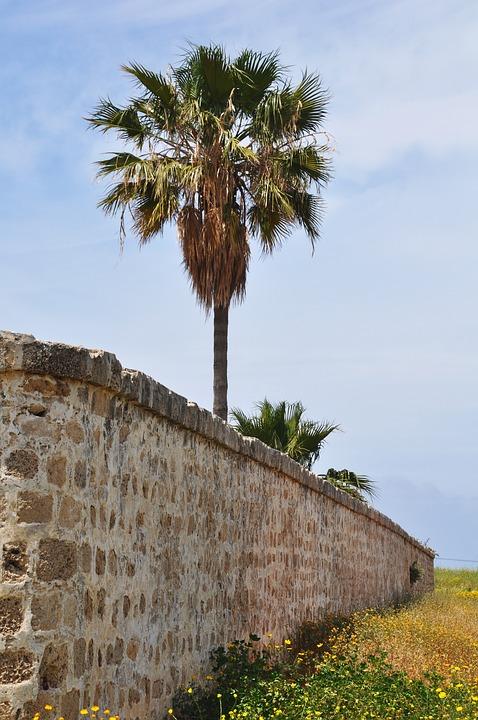 Israel, Palma, Green, Travel, Garden, Park, Urban, Sky