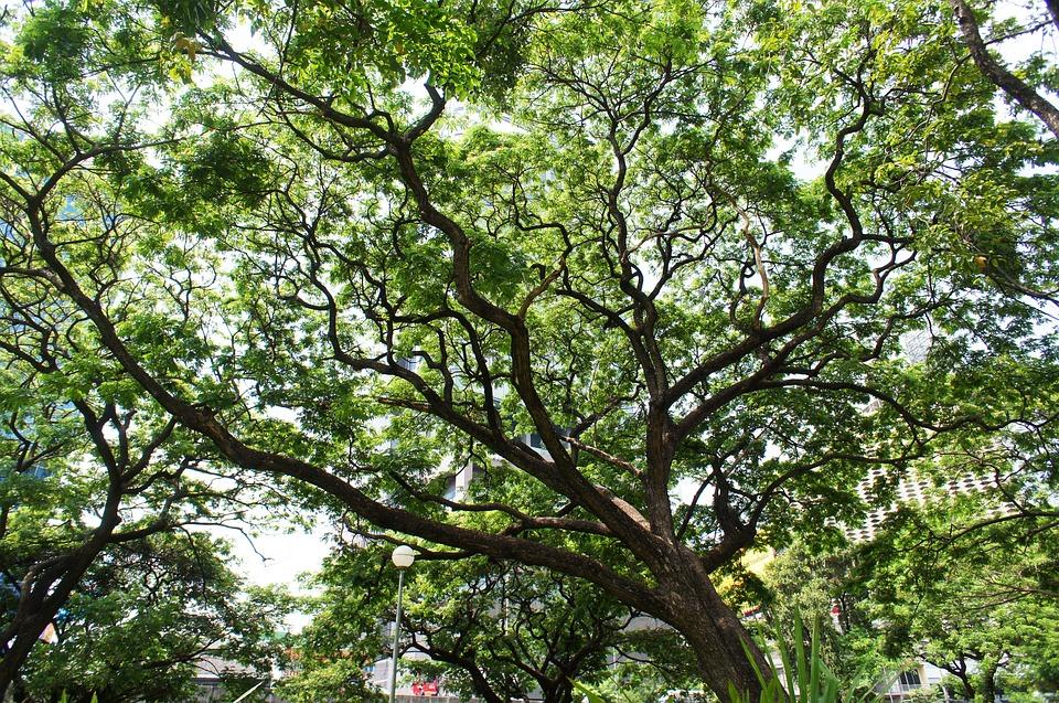 Tree, Green, Park, Leaf, Nature, Crown