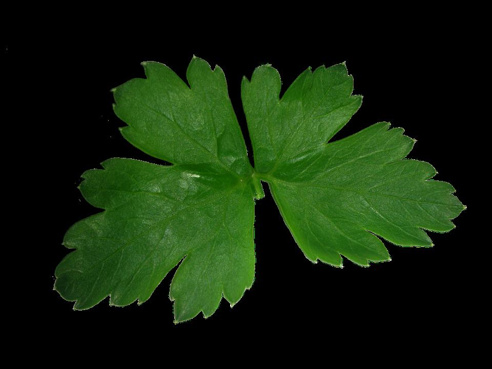 Parsley, Leaf, High, Texture, Green, Plant