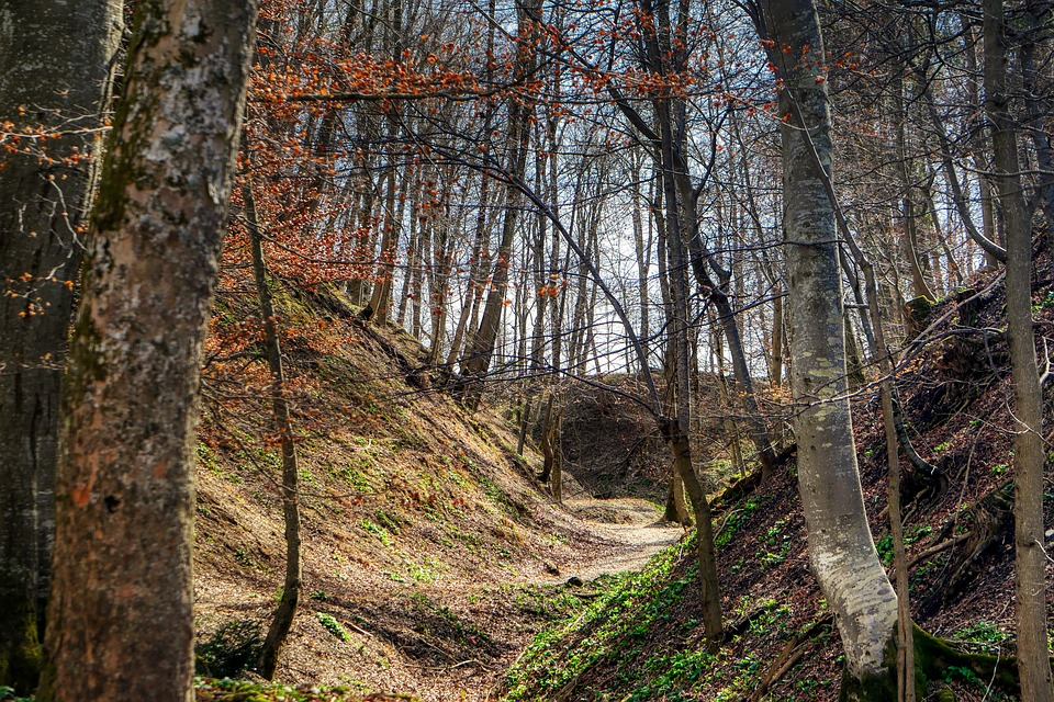 Forest, Landscape, Away, Tree, Nature, Path, Green