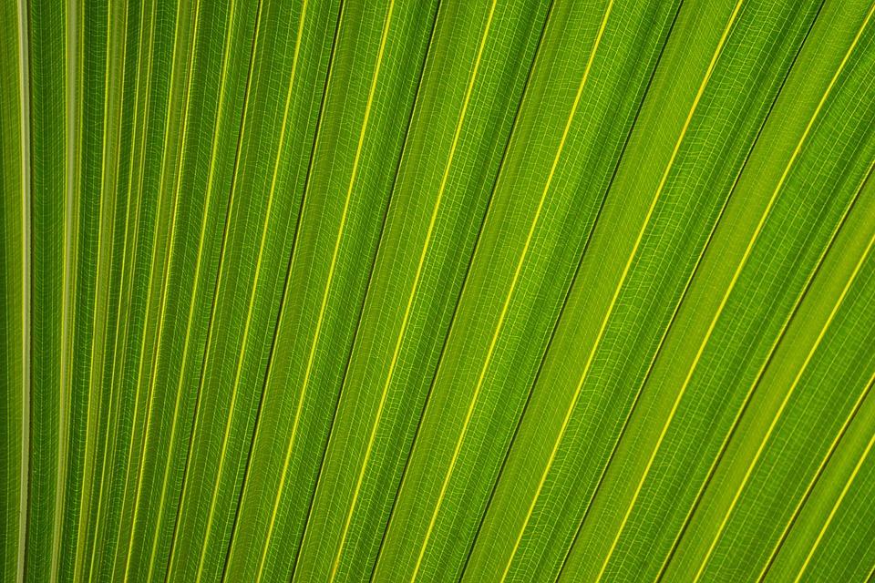 Green, Leaf, Pattern, Plant