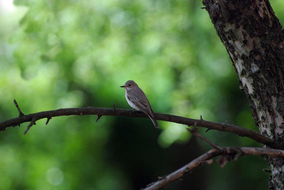 Bird, Nature, Animal, Green, Ornithology, Meadow, Pen