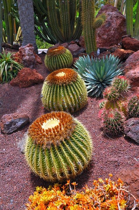 Cactus, Green, Plant