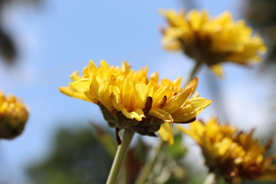 Nature, Flower, Yellow, Plant, Green, Summer