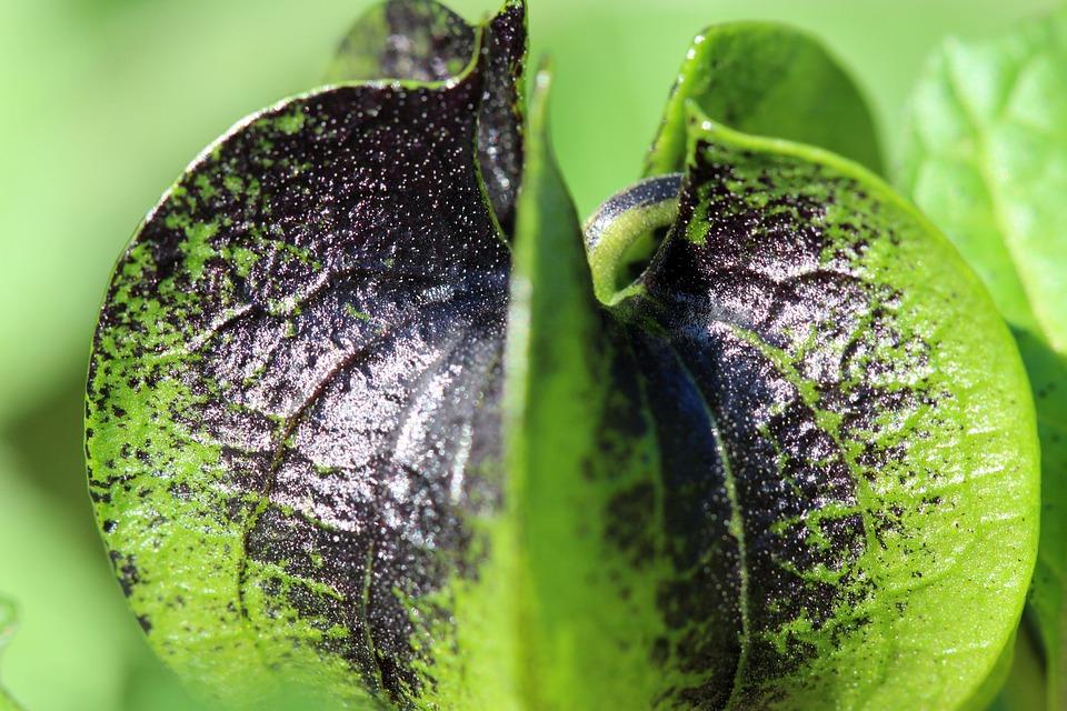 Plant, Macro, Nature, Plants, Garden, Green, Black