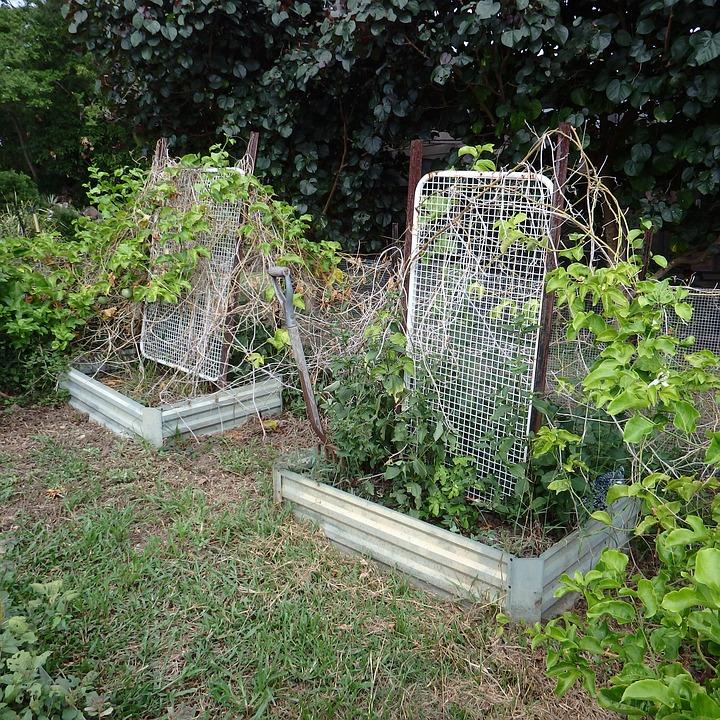 Over Grown, Garden, Weeds, Plant, Grown, Nature, Green