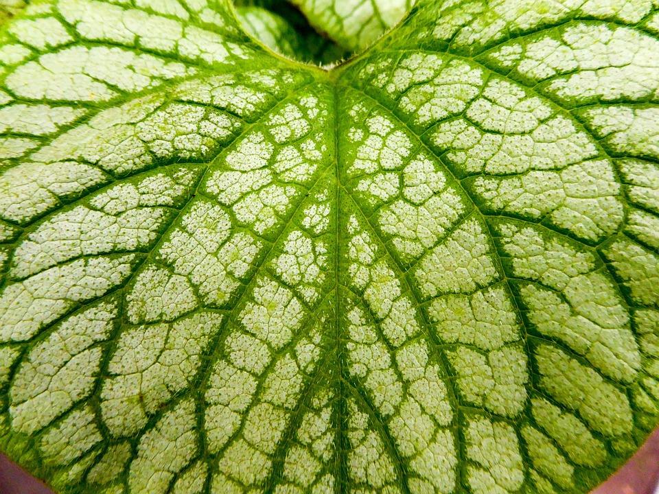 Leaf, Leaves, Green, Plant, Veins, Macro, Environments
