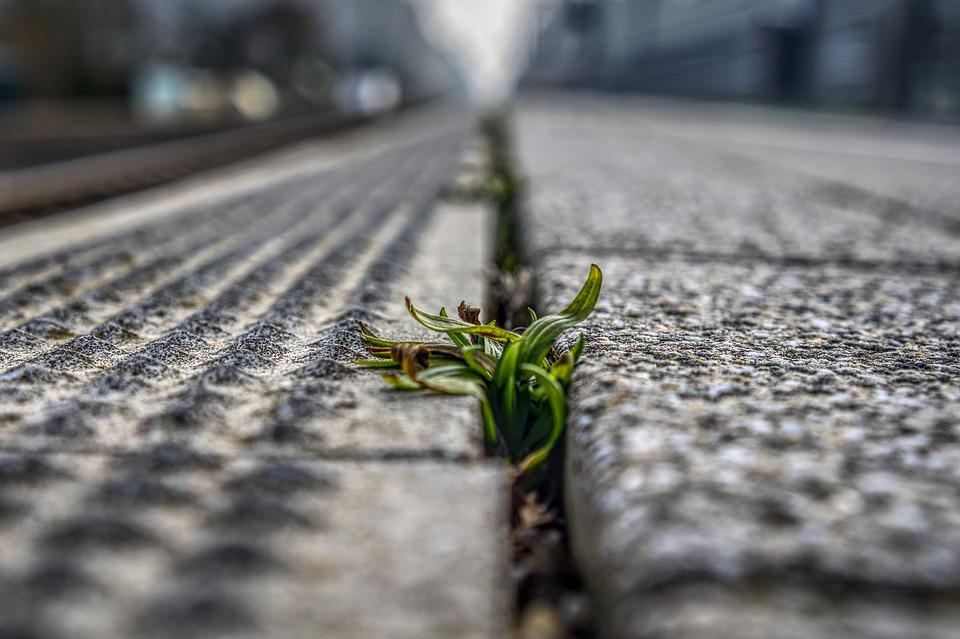 Platform, Weed, Plant, Green, Blurry, Out Of Focus