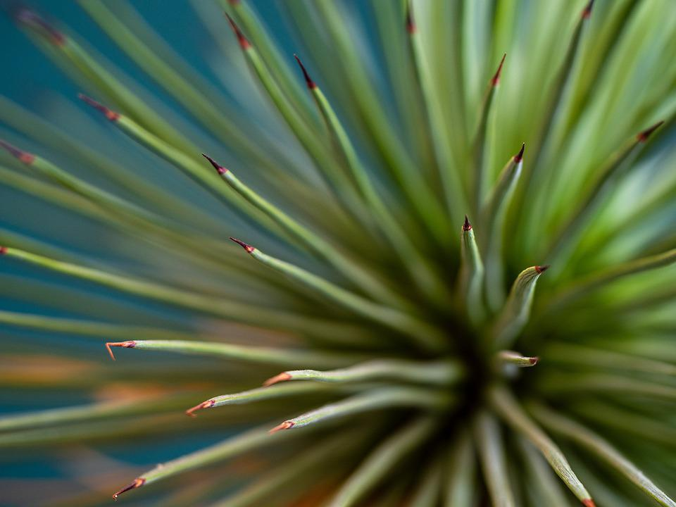 Plant, Sukulent, Spiny, Prickly, Spiked, Green, Red