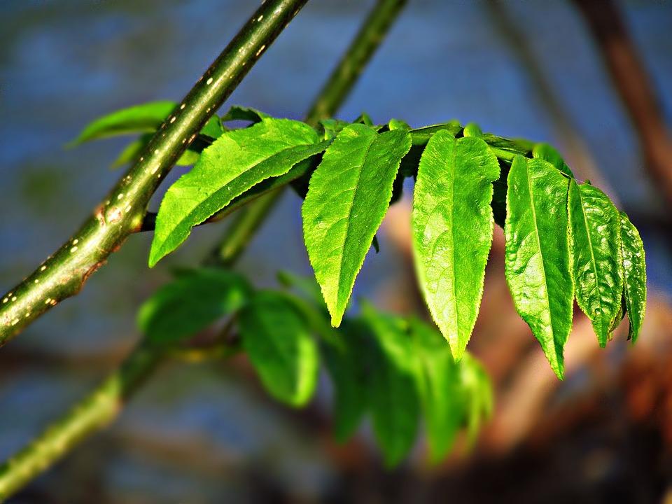 Foliage, Spring, Nature, Tree, Plant, Sprig, Green