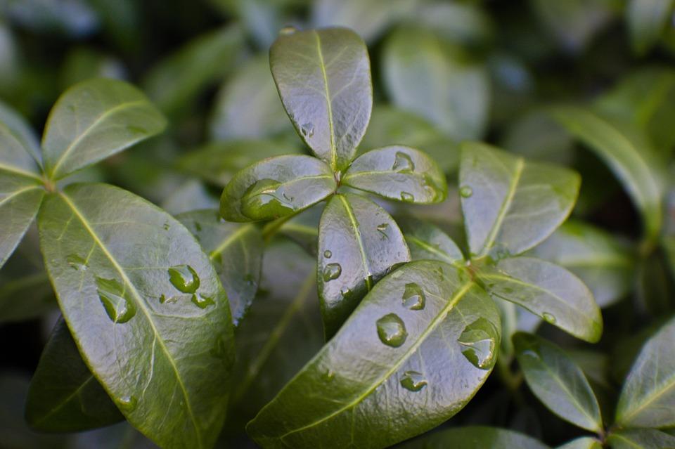 Leaves, Green, Nature, Plant, Wet, Rain