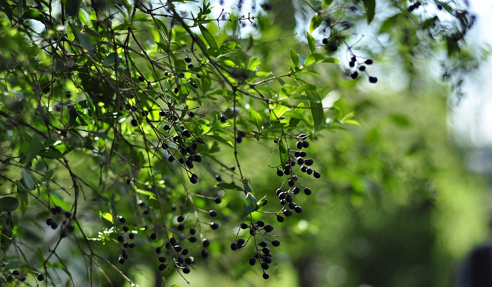 Nature, Plant, Berry, Green, Spring, Plants