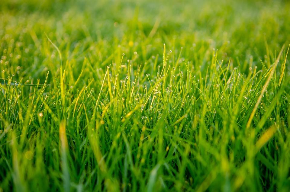 Grass, Green, Macro, Close Up, Tastes, Dew, Nature, Pre