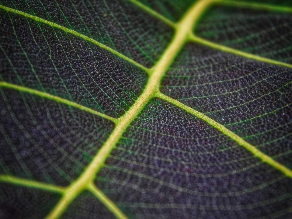 Leaf, Green, Macro, Rainy, Nature, Take Wood, Rain