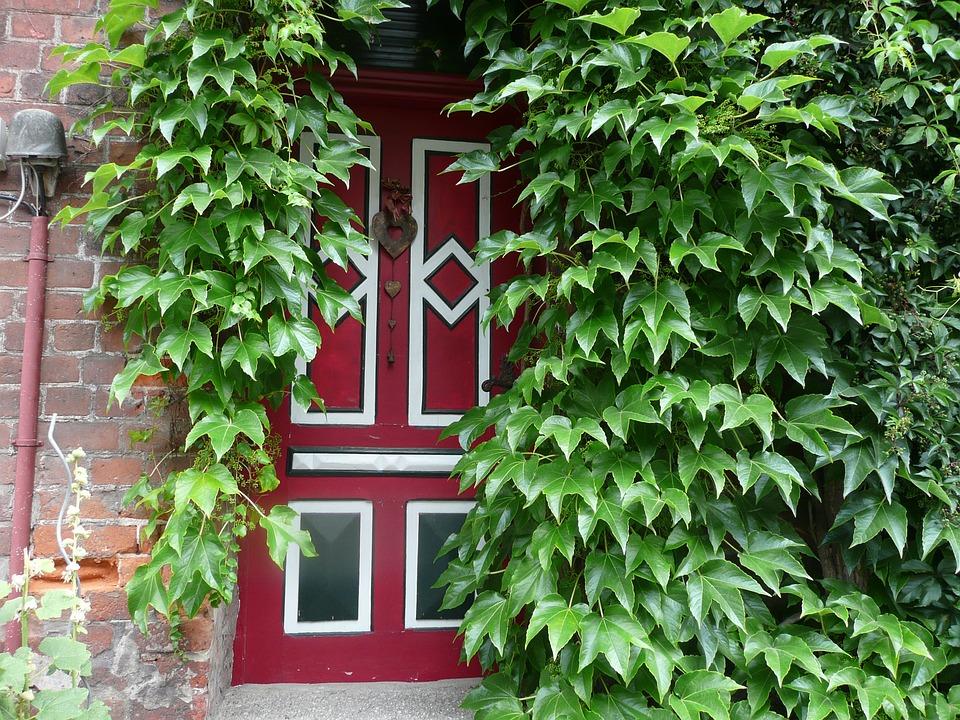 Entrance Door, Ivy, Green, Red, Home