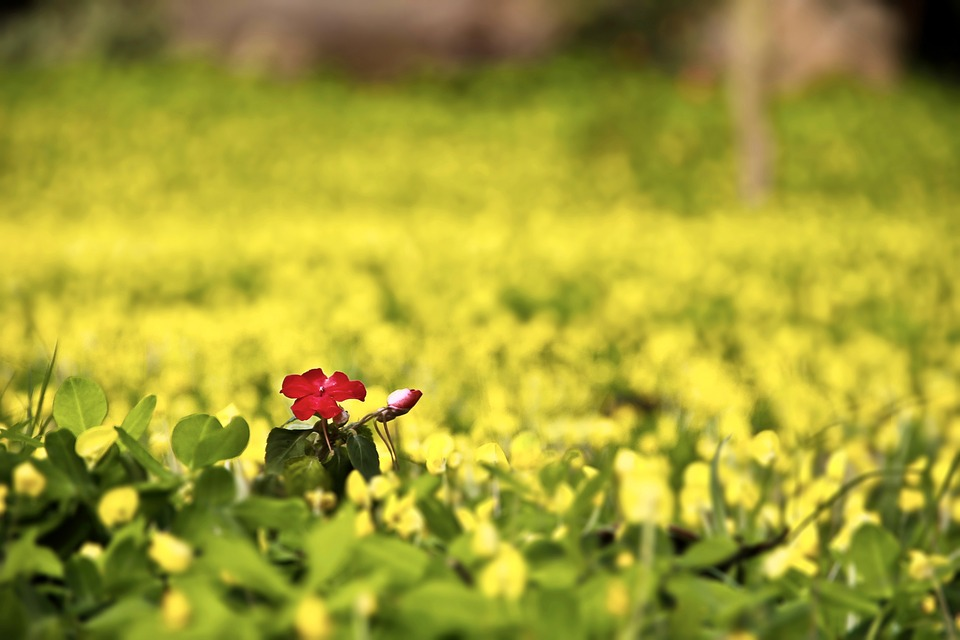 The Scenery, Nature, Farm, Green, Flower, Red, Yellow
