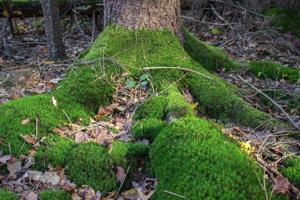 Root, Tribe, Moss, Tree, Log, Nature, Green, Tree Root