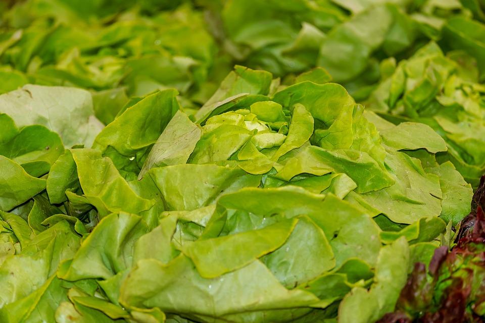 Salad, Leaf Lettuce, Green, Frisch, Healthy, Lettuce