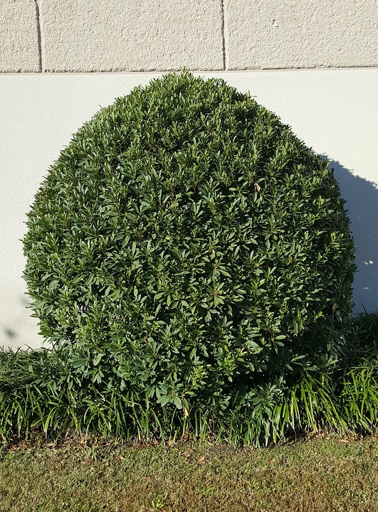 Tree, Shrub, Leaves, Green, Landscaping, Topiary, Round