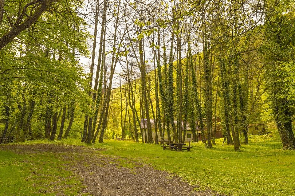 Croatia, Slavonia, Velika, Park, Leaf, Green, Nature