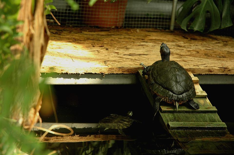 Nature, Turtle, Animal, Wild, Green, Slow, Water, Fauna