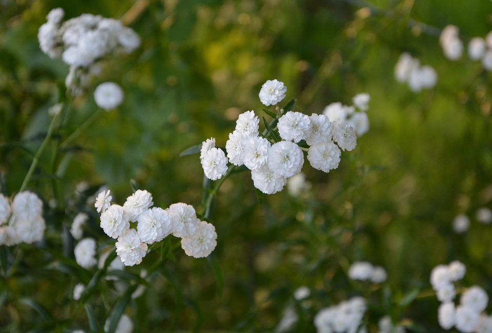 Free photo green small flowers white flowers white bush max pixel white flowers small flowers bush green white mightylinksfo