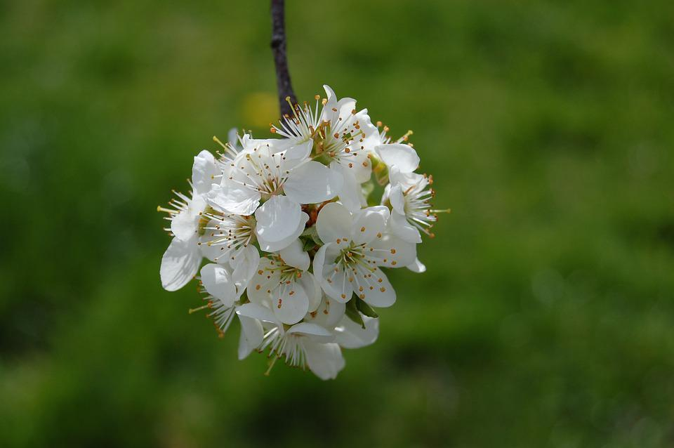 Spring, Nature, Blossom, Green Spring