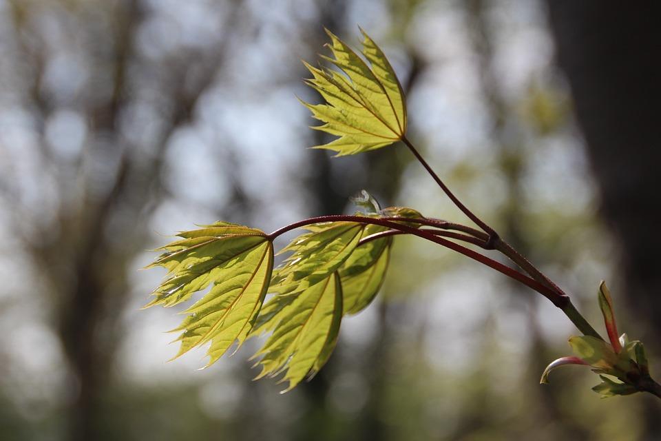 Leaves, Nature, Leaf, Green, Spring, Plant