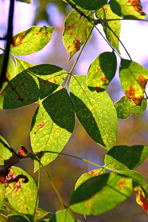 Foliage, Sunshine, Shadow, Nature, Wood, Green, Spring