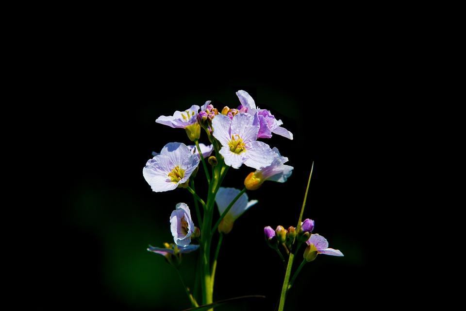 Flowers, Petals, Flora, Green Stems, Bunch Flowers