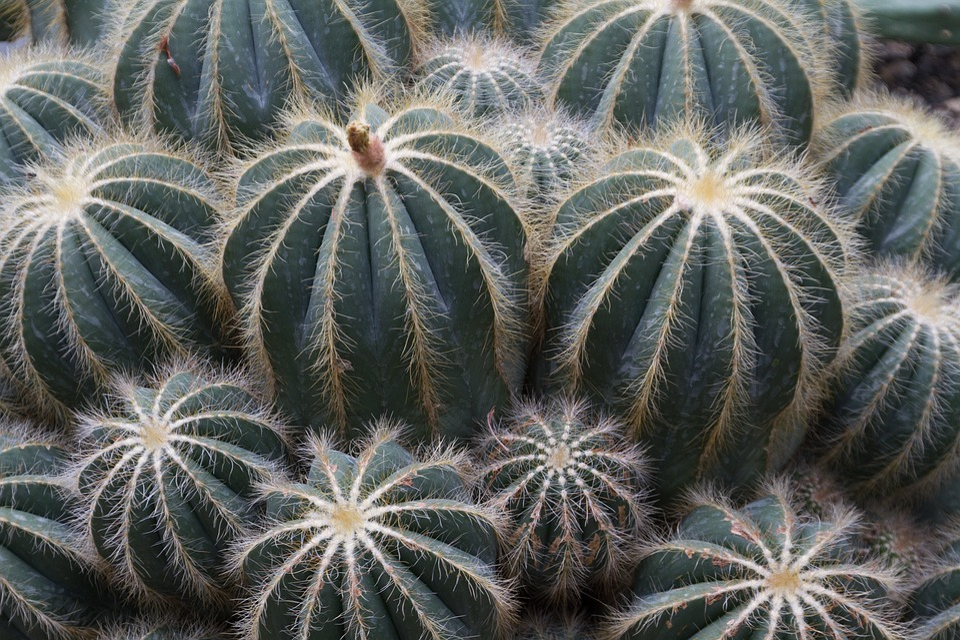 Cactus, Green, Sting