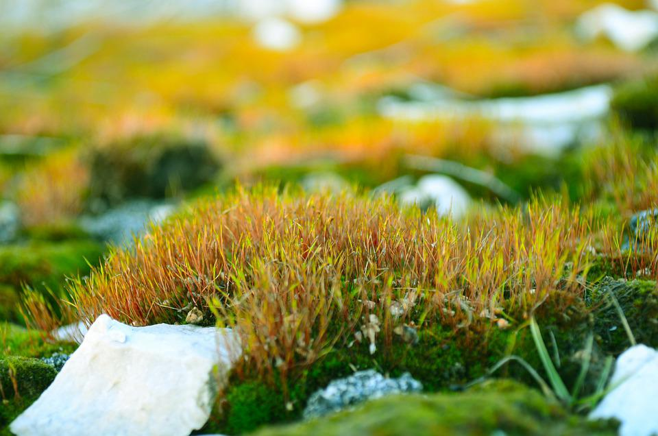 Green, Moss, Stones