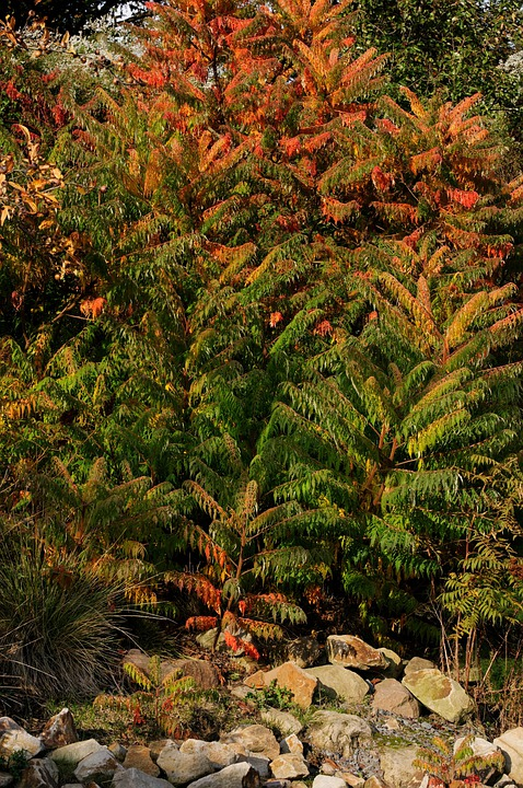Plant, Shrubs, Autumn, Red, Orange, Green, Stones
