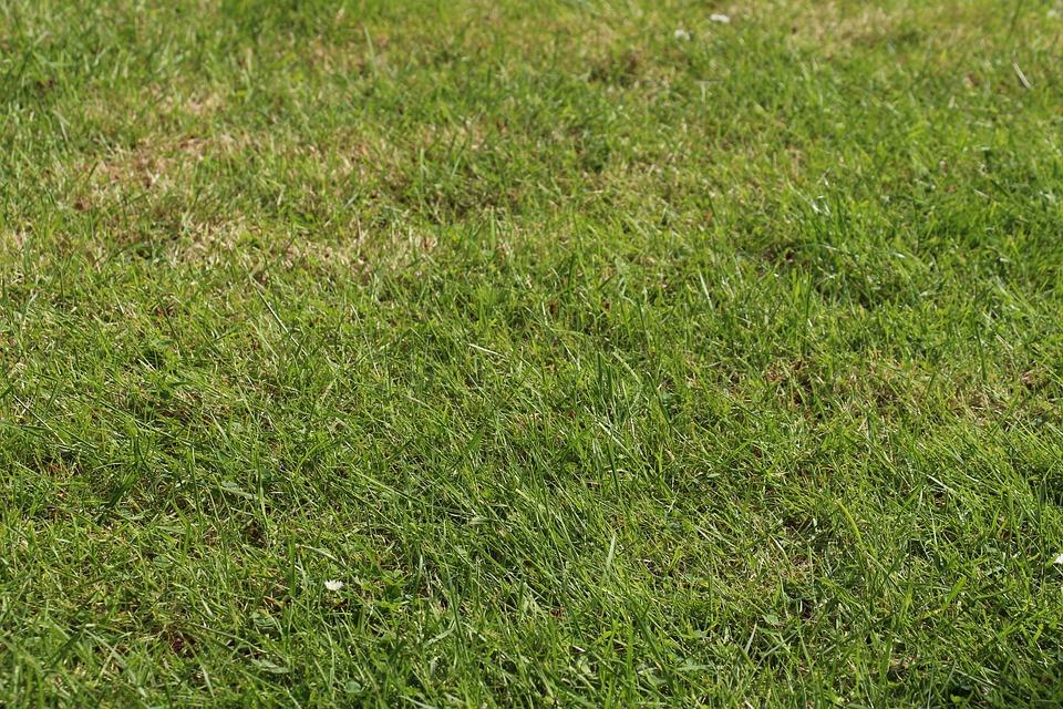 Rush, Meadow, Summer, Spring, Background, Green, Grass