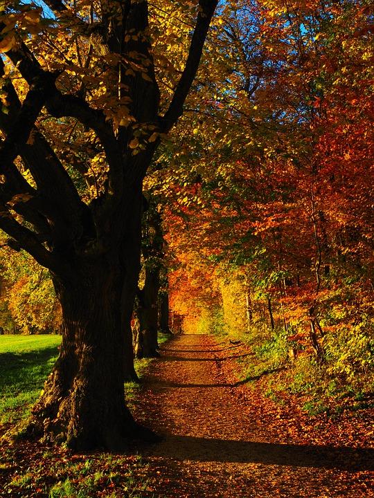 Tree, Avenue, Back Light, Sun, Field, Away, Sky, Green
